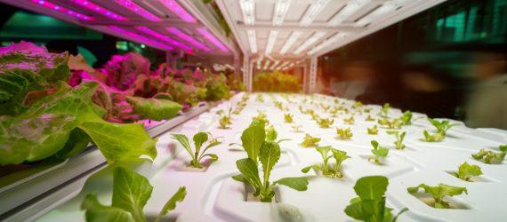 hydroponic-farm